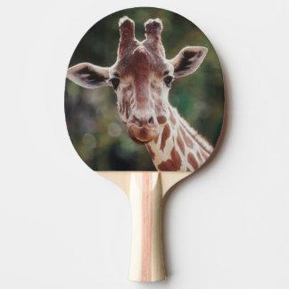 Raquette Tennis De Table Fermez-vous de la girafe réticulée