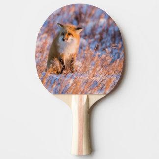 Raquette Tennis De Table Fox rouge dans la faune de Churchill d'hiver