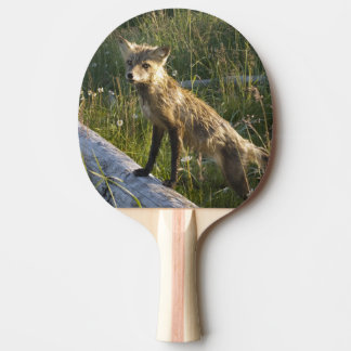 Raquette Tennis De Table Fox rouge, fulva de Vulpes sur le rondin, fleurs
