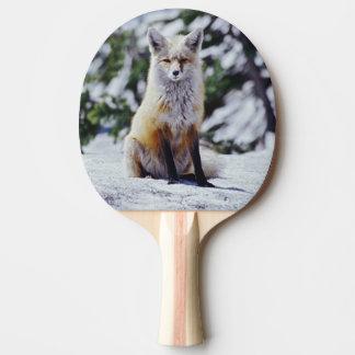 Raquette Tennis De Table Fox rouge se reposant sur la banque de neige,