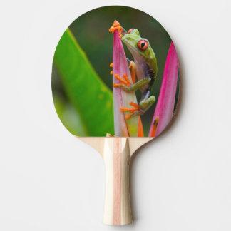 Raquette Tennis De Table grenouille d'arbre de Rouge-oeil, Costa Rica 2