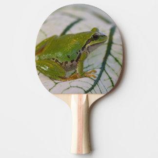 Raquette Tennis De Table Grenouille d'arbre Pacifique sur des fleurs dans