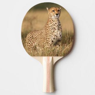 Raquette Tennis De Table Guépard sur le petit monticule pour une meilleure