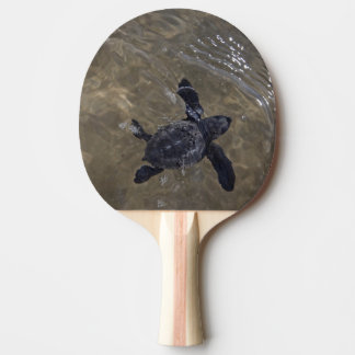 Raquette Tennis De Table Hatchlings 2 de tortue