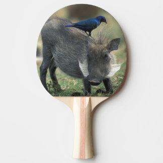 Raquette Tennis De Table L'Afrique du Sud, Pilanesburg GR, Warthog