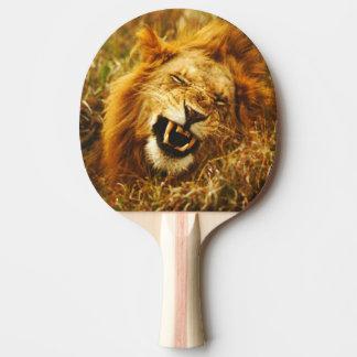 Raquette Tennis De Table L'Afrique, Kenya, Maasai Mara. Lion masculin.