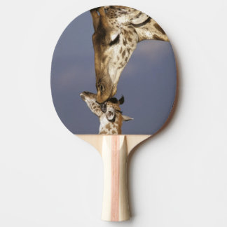 Raquette Tennis De Table L'Afrique, Kenya, masai Mara. Girafes (girafe