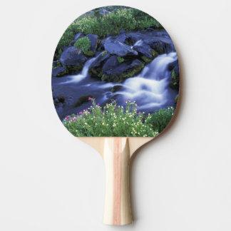 Raquette Tennis De Table L'Amérique du Nord, Etats-Unis, Washington, le
