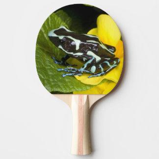Raquette Tennis De Table Le Costa Rica, péninsule d'Osa. Plan rapproché de
