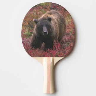 Raquette Tennis De Table Les Etats-Unis, Alaska, parc national de Denali.