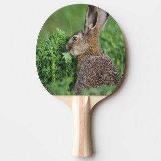 Raquette Tennis De Table Lièvres de Brown, europaeus de Lepus, jeune