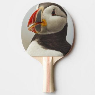 Raquette Tennis De Table Macareux atlantiques sur l'île de joint de Machias