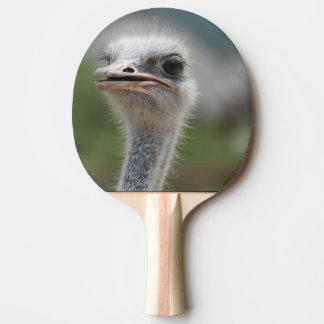 Raquette Tennis De Table Oiseau d'autruche