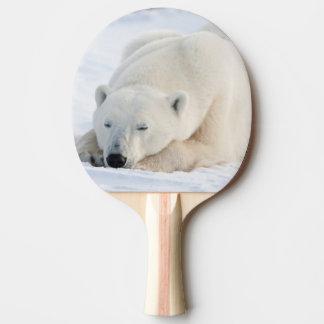 Raquette Tennis De Table Ours blanc en hiver
