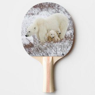 Raquette Tennis De Table Ours blancs femelles et deux petits animaux