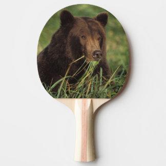 Raquette Tennis De Table ours brun, arctos d'Ursus, ours gris, Ursus 7
