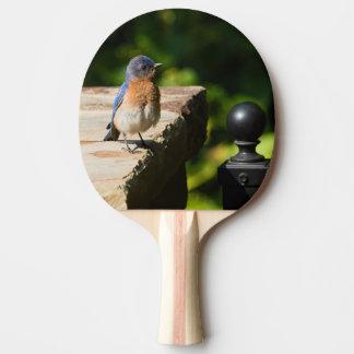 Raquette Tennis De Table Palette orientale de ping-pong d'oiseau bleu