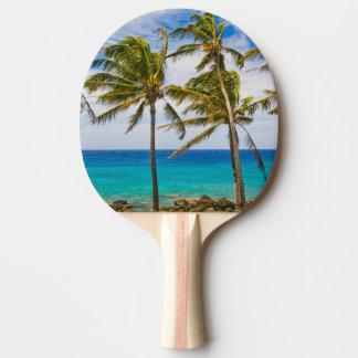 Raquette Tennis De Table Palmiers de noix de coco (nucifera de Cocos)