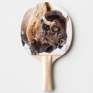 Raquette Tennis De Table Taureau de bison forageant dans la neige profonde