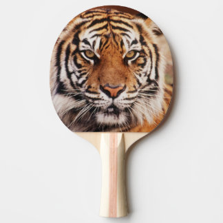 Raquette Tennis De Table Tigre de Sumatran, Panthera le Tigre
