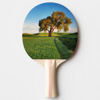 Raquette Tennis De Table Un arbre solitaire entouré par Rolling Hills de