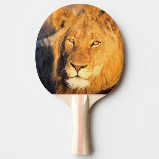 Raquette Tennis De Table Un lion Maned rouge regardant l'appareil-photo