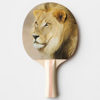 Raquette Tennis De Table Un portrait d'un lion, parc franchissant les