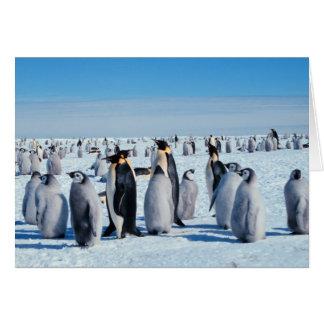 Rassemblement de pingouin carte de vœux