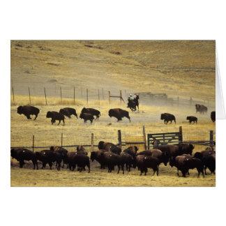 Rassemblement national de chaîne de bison au carte de vœux