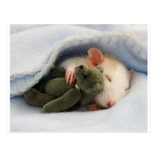 rat mignon dormant avec le nounours carte postale