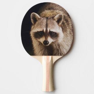 Raton laveur du nord, lotor de Procyon, adulte à Raquette Tennis De Table