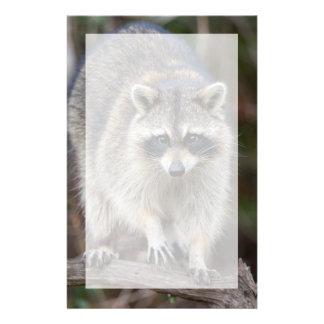 Raton laveur, lotor de Procyon, la Floride, Papier À Lettre Customisé