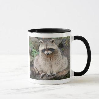 Raton laveur mugs