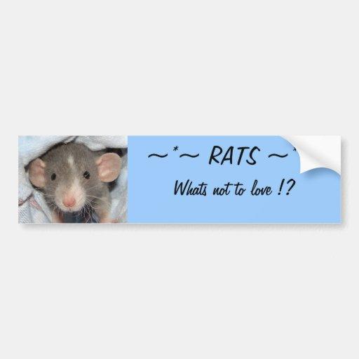 RATS… ce qui n'est pas d'aimer ? Autocollants Pour Voiture