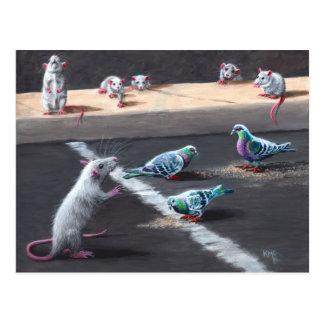 Rats et carte postale de pigeons
