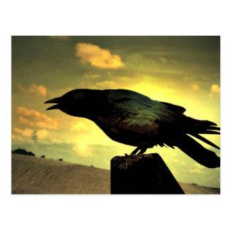 Raven noir carte postale