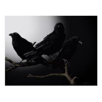 Ravens déplaisant dans la carte postale de clair