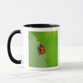 Rayon de soleil au-dessus de la coccinelle mug