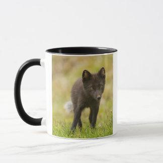 Recherches de renard arctique de nourriture mug