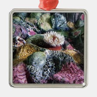 Récif coralien d'aquarium sous-marin coloré ornement carré argenté