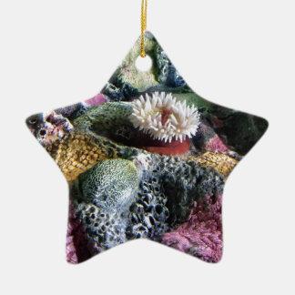 Récif coralien d'aquarium sous-marin coloré ornement étoile en céramique