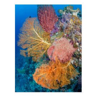Récif coralien pittoresque carte postale
