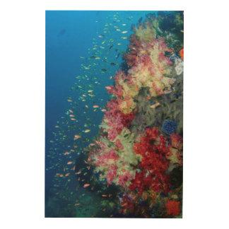 Récif coralien sous-marin, Indonésie Impression Sur Bois