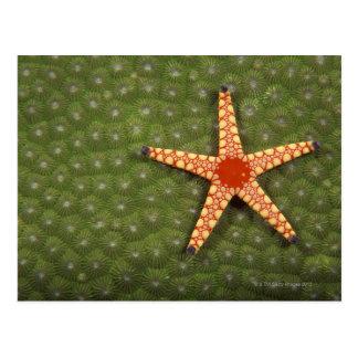 Récifs de nettoyage d'étoile de mer en mangeant carte postale