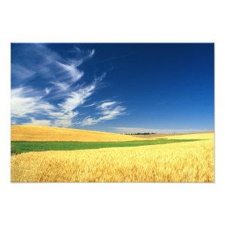 Récolte de blé sur le Palouse dans oriental Photos