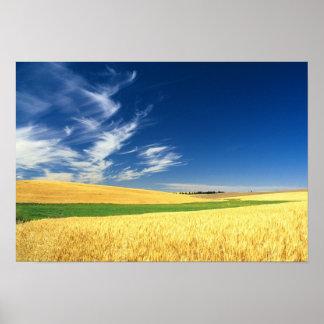 Récolte de blé sur le Palouse dans oriental Posters