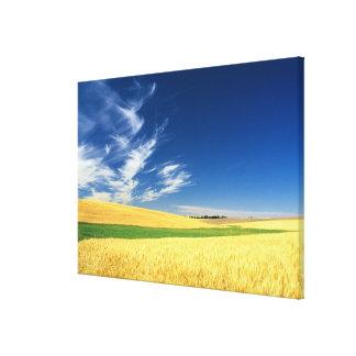 Récolte de blé sur le Palouse dans oriental Toiles