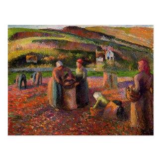 Récolte de pomme de terre de Camille Pissarro- Carte Postale