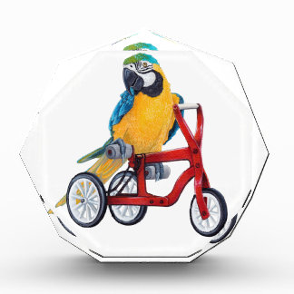 Récompense Ara de perroquet sur le vélo de tricycle