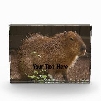 Récompense Capybara